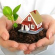 Small house and plant in hands. — Stock Photo