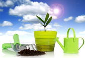 Plant with garden tools. — Stock Photo