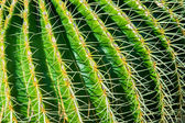 Close-up cactus — Stock Photo