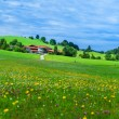 Alps mountain meadow tranquil summer view — Stock Photo