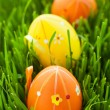 Easter eggs in green grass - Stock Photo