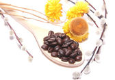Coffee grains on wooden spoon, flowers and branches of pussy-wil — Stock Photo