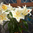 Bouquet of fine white lilies — Stock Photo