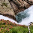 Alpine roses on glacier stream — Stock Photo