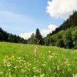 Постер, плакат: Summer meadow in the Erzgebirge