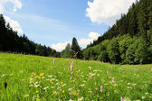 Summer meadow in the Erzgebirge — Stock Photo