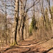 Sunny forest path in spring — Stock Photo