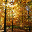 Colorful forest in fall-3 — Stock Photo #9446790
