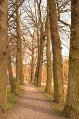 Um caminho sob árvores decíduas nuas — Foto Stock