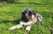 Cão jovem bonito na grama — Foto Stock