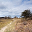 Foto Stock: Path in savanna