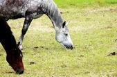 Horses on pasture — Stock Photo