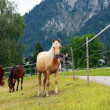 Horses on the pasture — Stock Photo #8158310
