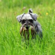 Stockfoto: Funny god in grass