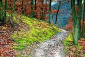 Cesta v lese — Stock fotografie