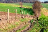 Rural path through the fields — Stock Photo