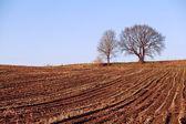 Minimalistic view on field — Stock Photo