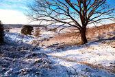 Winter view — Stock Photo