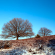 Stok fotoğraf: Tree over blue sky