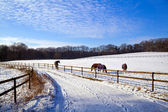 Winter pasture with horses — Stock Photo