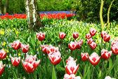 Jardin coloré — Photo