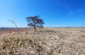 One tree on plain land — Stock Photo
