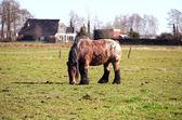 Cavalo velho sujo — Fotografia Stock