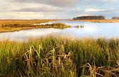 Beautiful Dutch landscape close to Lekstermeer — Stock Photo