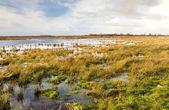 översvämmade fält och sky — Stockfoto