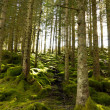 Green forest — Stock Photo #10066544