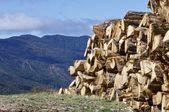 Skogsavverkning — Stockfoto
