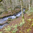 Stock Photo: Creek in forest