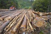 Déforestation — Photo