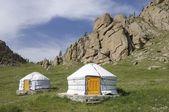 Mongolian gers — Stock Photo