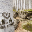 Heart engraved in the trunk of a tree - Stock Photo