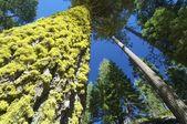 Lichen — Stockfoto