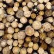 Logs background — Stock Photo