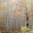 Forest in autumn — Stock Photo #8562945