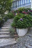 Tipico giardino — Foto Stock