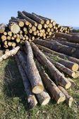 森林伐採 — ストック写真