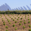 Vineyard and solar panels - Foto Stock