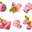 Set of pink flower — Stock Photo #10317767