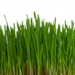 Bush of green grass — Stock Photo