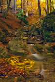 Autumn stream in wood — Stock Photo