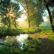Summer morning in forest - Stock Photo