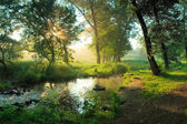 Summer morning in forest — Stock Photo