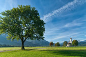 Landscape with big tree — Stock Photo