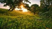 Rano w lesie — Zdjęcie stockowe