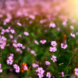 Field of flowers with the sun - Stock Photo