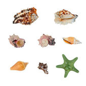 Seashells collection — 图库照片